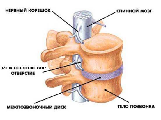 Зоны, подверженные остеопорозу позвоночника