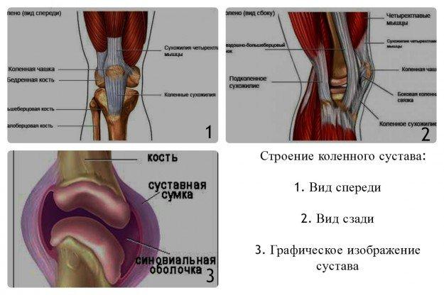 Различий, в строении женского и мужского колена, нет
