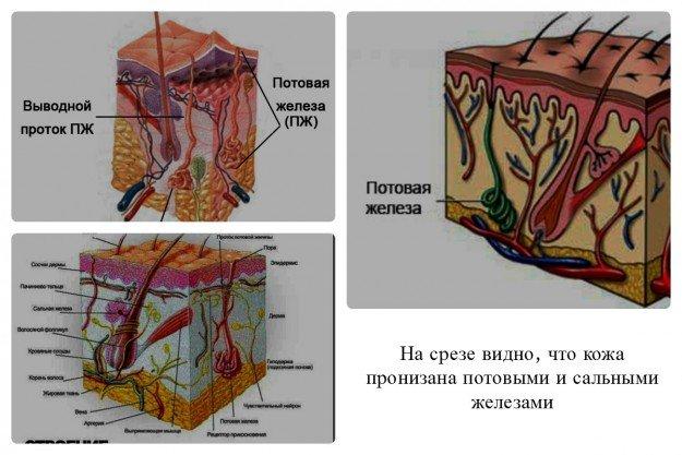 Потовых и сальных желез у мужчин больше, это является причиной того, что копчиковой кистой, мужчины страдают чаще, чем женщины