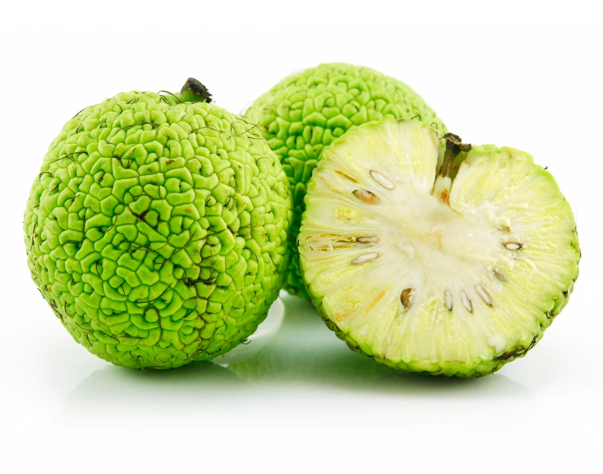 плоды маклюры