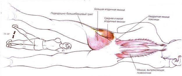 ЛФК для грудного отдела