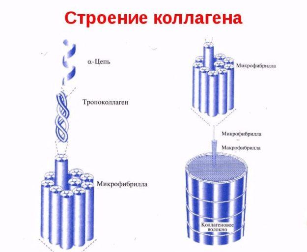 Схема строения коллагенового волокна