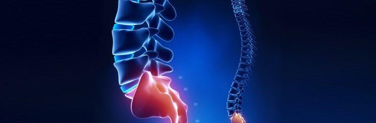 Spine sacral region anatomy in x-ray blue