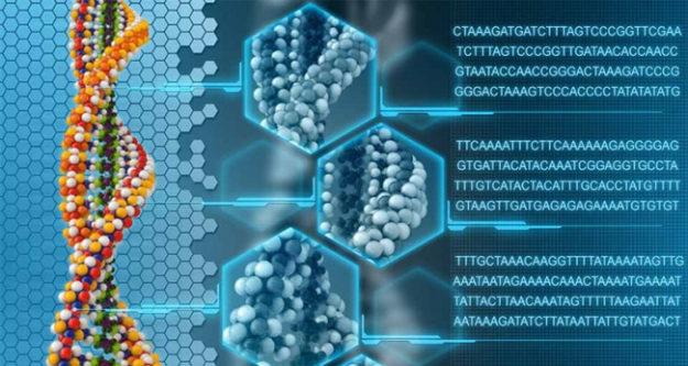 Последовательности нуклеотидов в молекуле ДНК